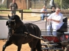 theuns-b-in-the-carriage-driven-by-nyncke-bosma