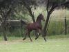 Hector 2011 Keuring