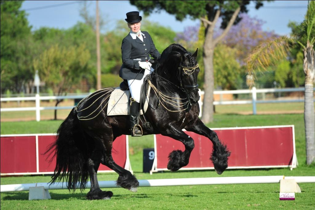 Friso fan S. Reserve Champion Strictly Come Showing Ridden by Jolanda Schreuder