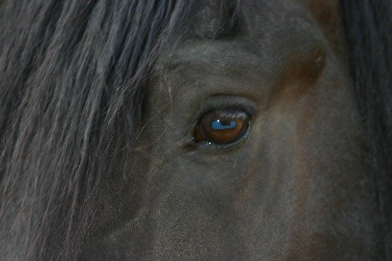 Dana Eye