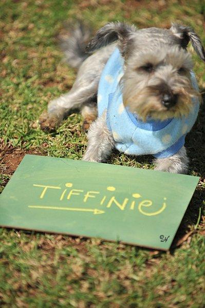 Tiffinie